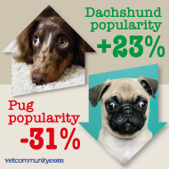 New figures show fall in popularity of pugs, bulldogs and French bulldogs