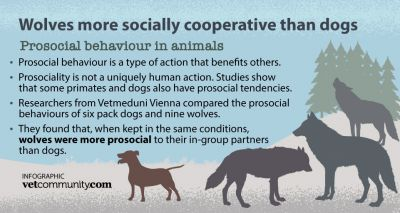 Study shows wolves are more socially tolerant than dogs