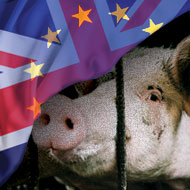 UK will adopt EU animal welfare standards post-Brexit, Defra minister