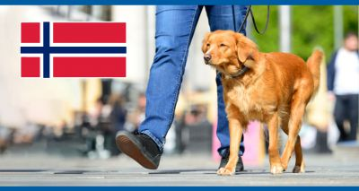 Several dogs die in Norway after mystery illness