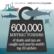 Report lists the world's top 20 shark and ray catchers