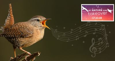 Soothing birdsong to sweep the nation