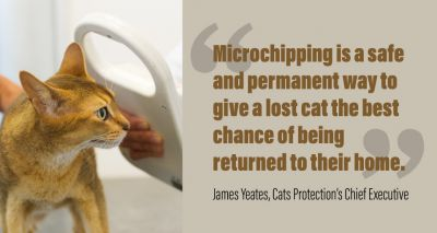 Cat microchipping consultation launched