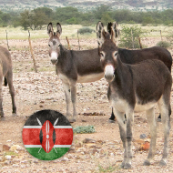 Charity calls for a ban on donkey skin trade in Kenya
