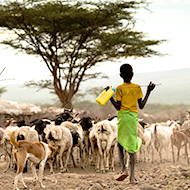 RVC wins award for research into deadly 'goat plague'