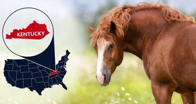 West Nile Virus confirmed in Kentucky horse