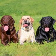 Dogs have hidden coat colours