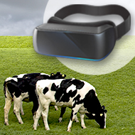 Russian cows given virtual reality headsets to improve mood
