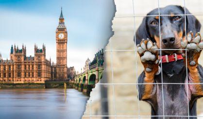 Animals 'at risk' from welfare legislation delays
