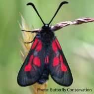 Britain and Ireland's moths 'on the move'