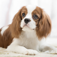 Study reveals new insights into canine mammary cancer