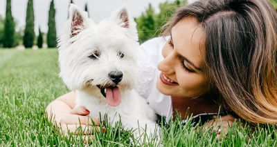 Canine cancer vaccine trial gets underway