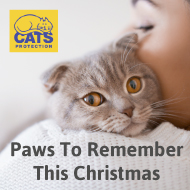 Remembering much-loved cats