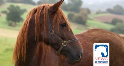 Guides to help horse owners 'cut costs not care'