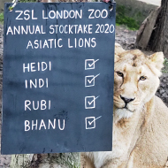 Annual stocktake gets underway at London Zoo