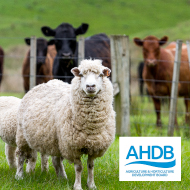 New group to tackle diseases in UK livestock