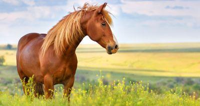 Equine colic symposium details released