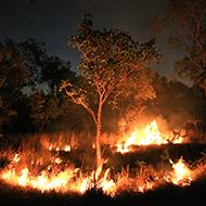 Zoo staff save animals from Australian bushfires