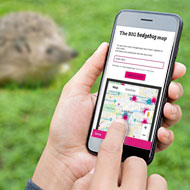 Hedgehog Street launches new app ahead of National Hedgehog Day