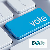 Voting opens for BVA regional representatives