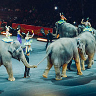 Welsh MPs vote in favour of circus ban