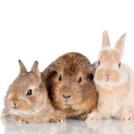 Blue Cross calls on volunteers to help foster small animals