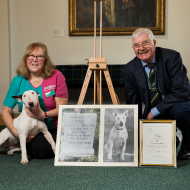Hero WWII dog receives PDSA Commendation
