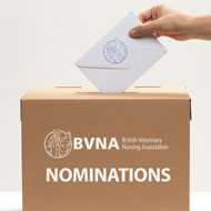 Nominations open for BVNA Council elections