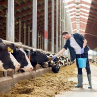 Human behaviour project set to improve cattle wellbeing