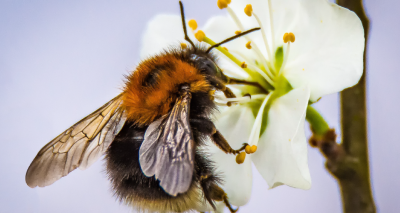Improvements needed to protect pollinators, study finds