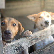 Study shows meat farm dogs suffer from chronic stress