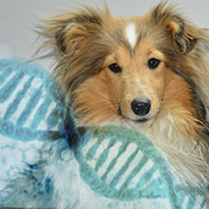 Dog genome project makes first discovery