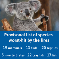 Australia identifies 113 species in need of 'urgent help' after bushfires