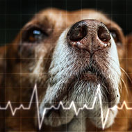 Researchers invent new health tracker for pets