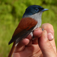 Study reveals insights into bird diversity on islands