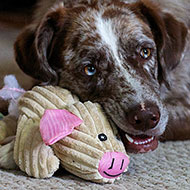 Study shows dogs may benefit from scented toys