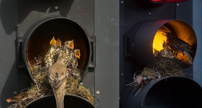 Birds set up nest in Leeds traffic light