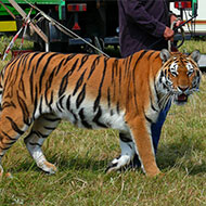 Welsh circus ban passes second reading