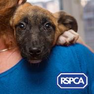 RSPCA to continue helping animals despite COVID-19