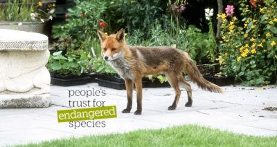 Volunteers sought to record mammal sightings in their gardens