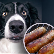 Cooked bacon and sausages used to rescue lost dog
