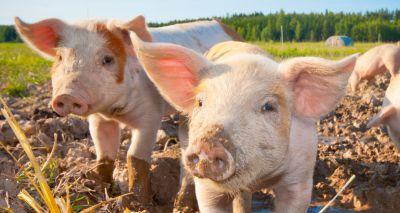 SRUC survey asks for farmers' views on animal welfare