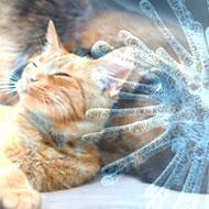 Diagnostics firm reports no COVID-19 cases in pets