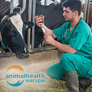 AnimalHealthEurope confirms no current problems with veterinary medicine supply