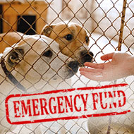 The Kennel Club announces emergency relief fund