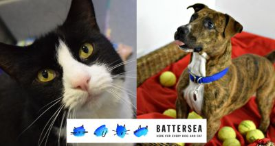 Huge rise in rescue pet rehoming figures for Battersea