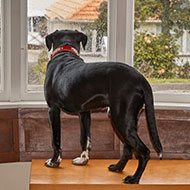 New research outlines causes of separation anxiety in dogs