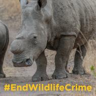 International coalition urges countries to #EndWildlifeCrime