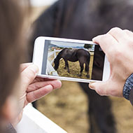 Horse healthcare videos to help owners during lockdown