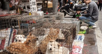 Shenzhen bans consumption of cat and dog meat